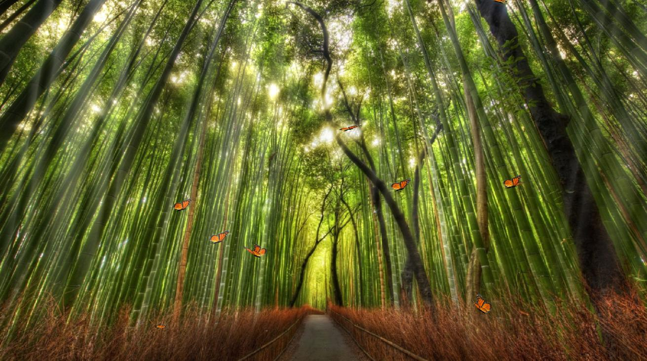 Download Beautiful Bamboo Forest Animated Wallpaper - photo#28