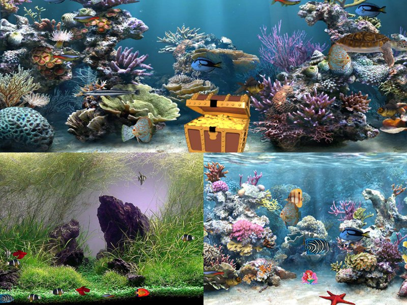 Clear Aquarium Animated Wallpaper