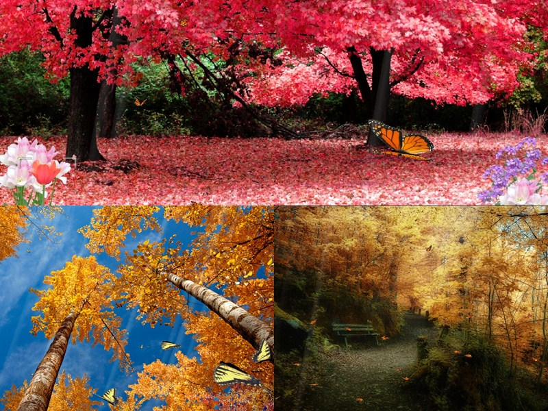 Enjoy the beautiful colors of nature with full of life, Embrace an ...