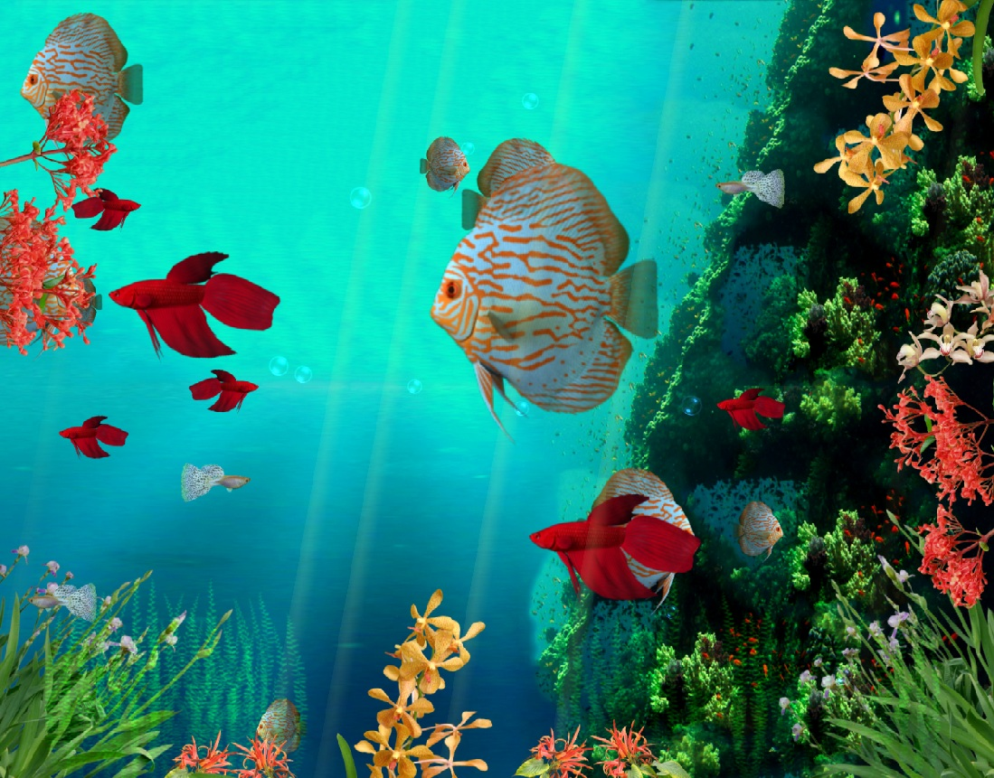 Download coral reef aquarium 3d animated wallpaper Aquarium free days