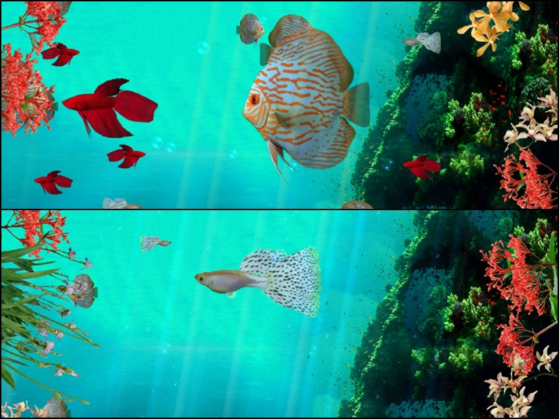 Coral Reef Aquarium Animated Wallpaper, 2013 CoralReefAquarium3D_