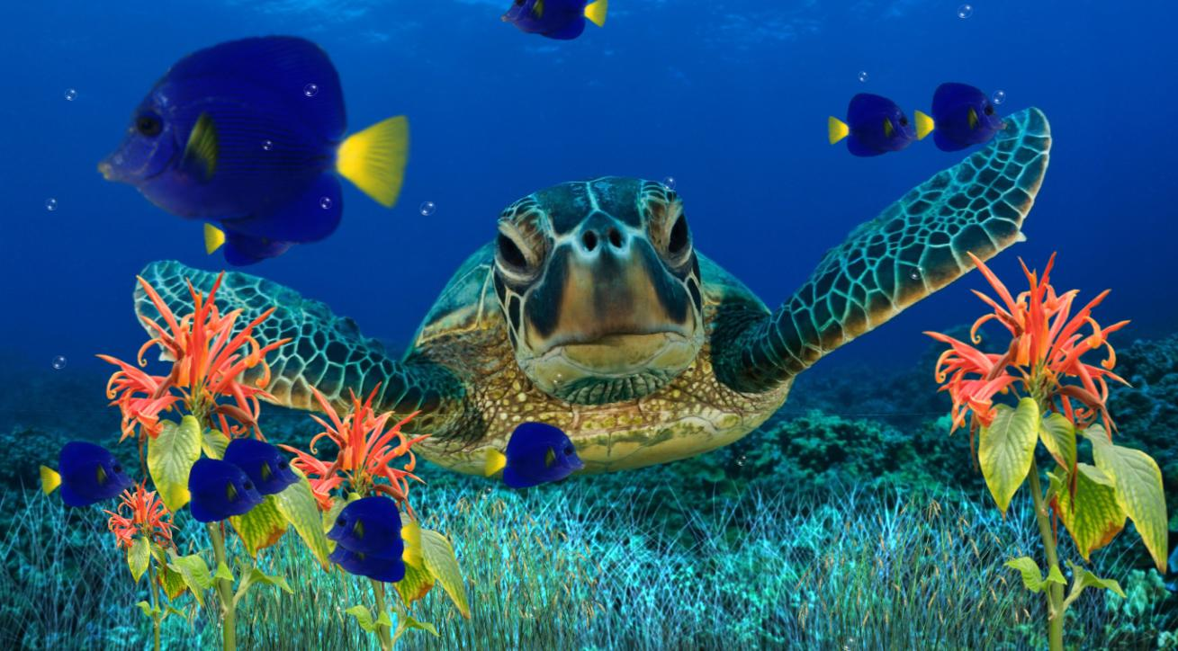free animated aquarium screensavers