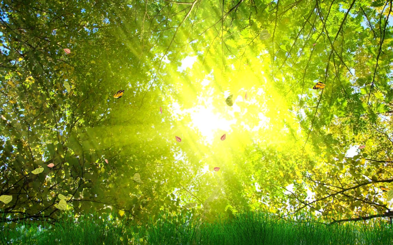 Download Golden Nature Animated Wallpaper  DesktopAnimated.com
