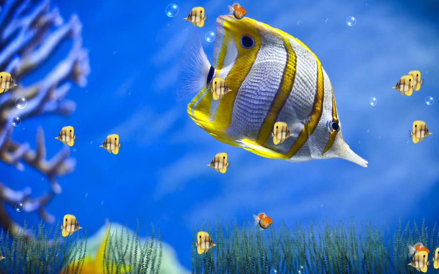 download marine life aquarium animated wallpaper free