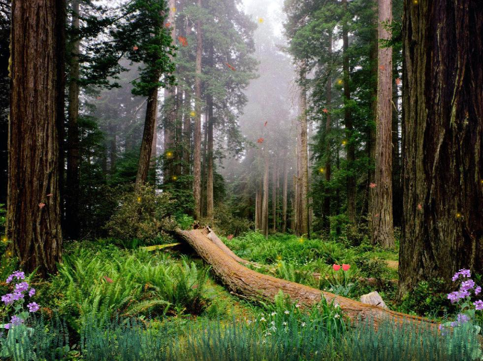 Download Morning In The Forest Animated Wallpaper ... - photo#3
