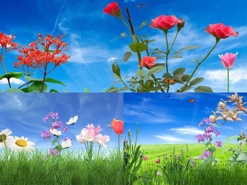 Download Morning Flower Animated Wallpaper