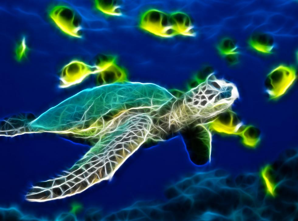 Sea Turtle Animated Wallpaper 1.0 full