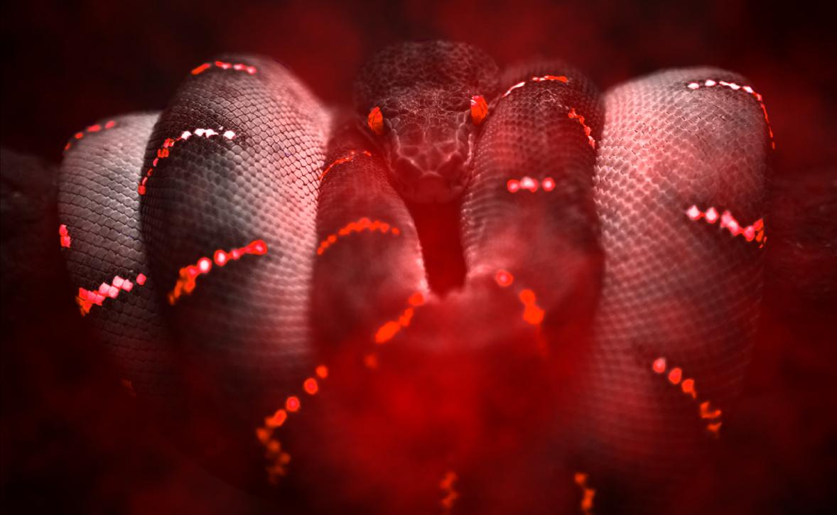 Snakes Animated Wallpaper Preview