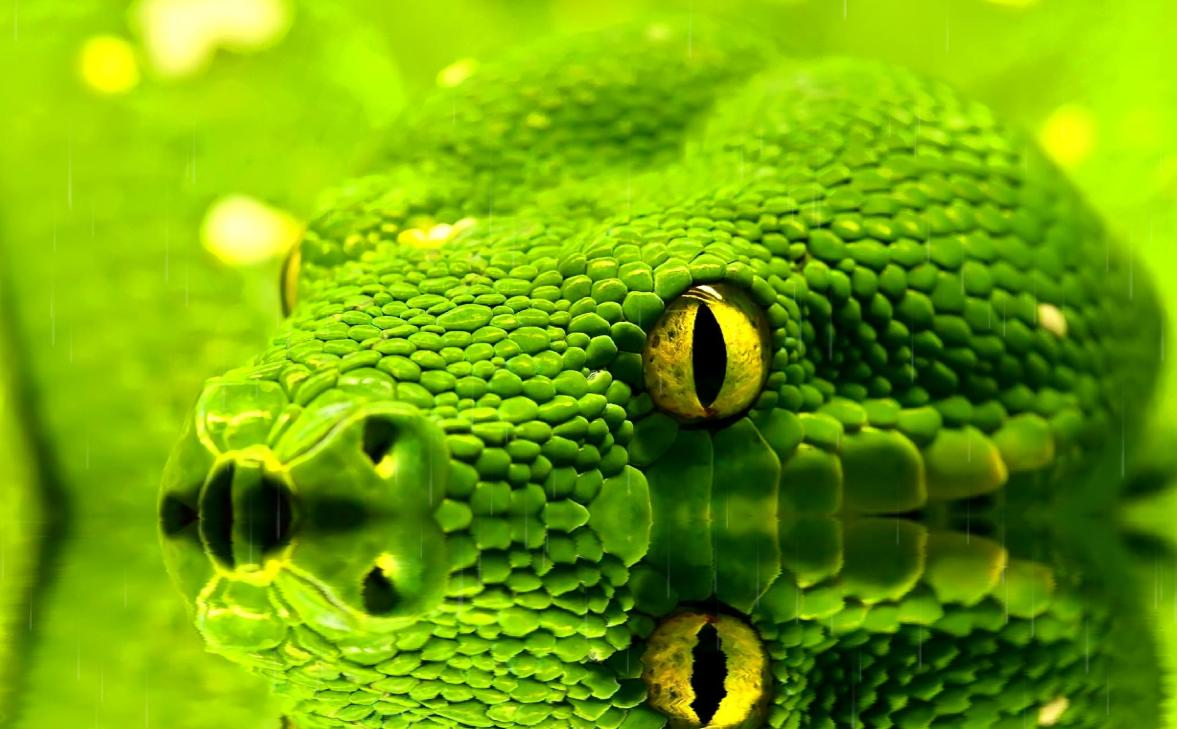 Screenshot of Snakes Animated Wallpaper
