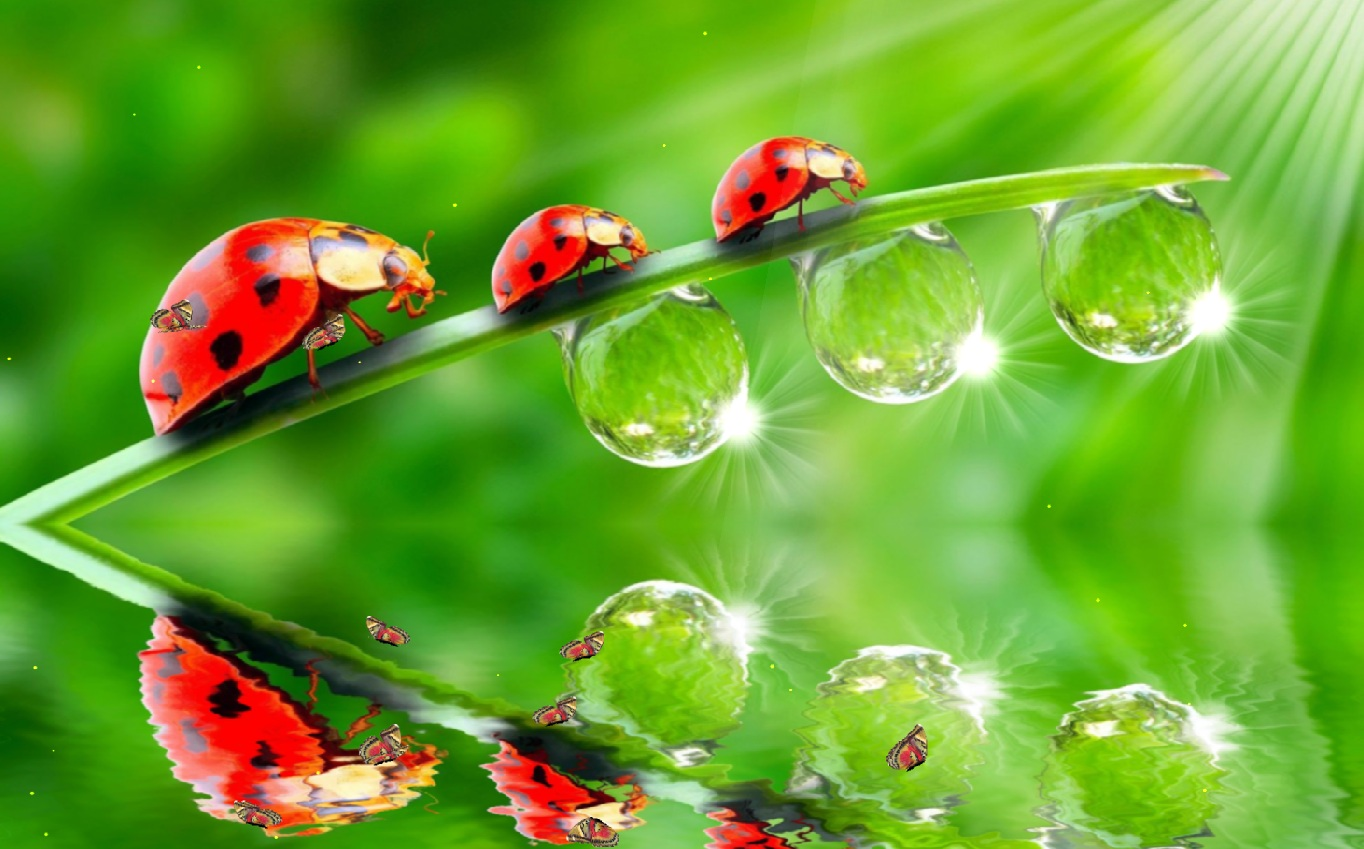 insects ladybirds desktop wallpapers - photo #47