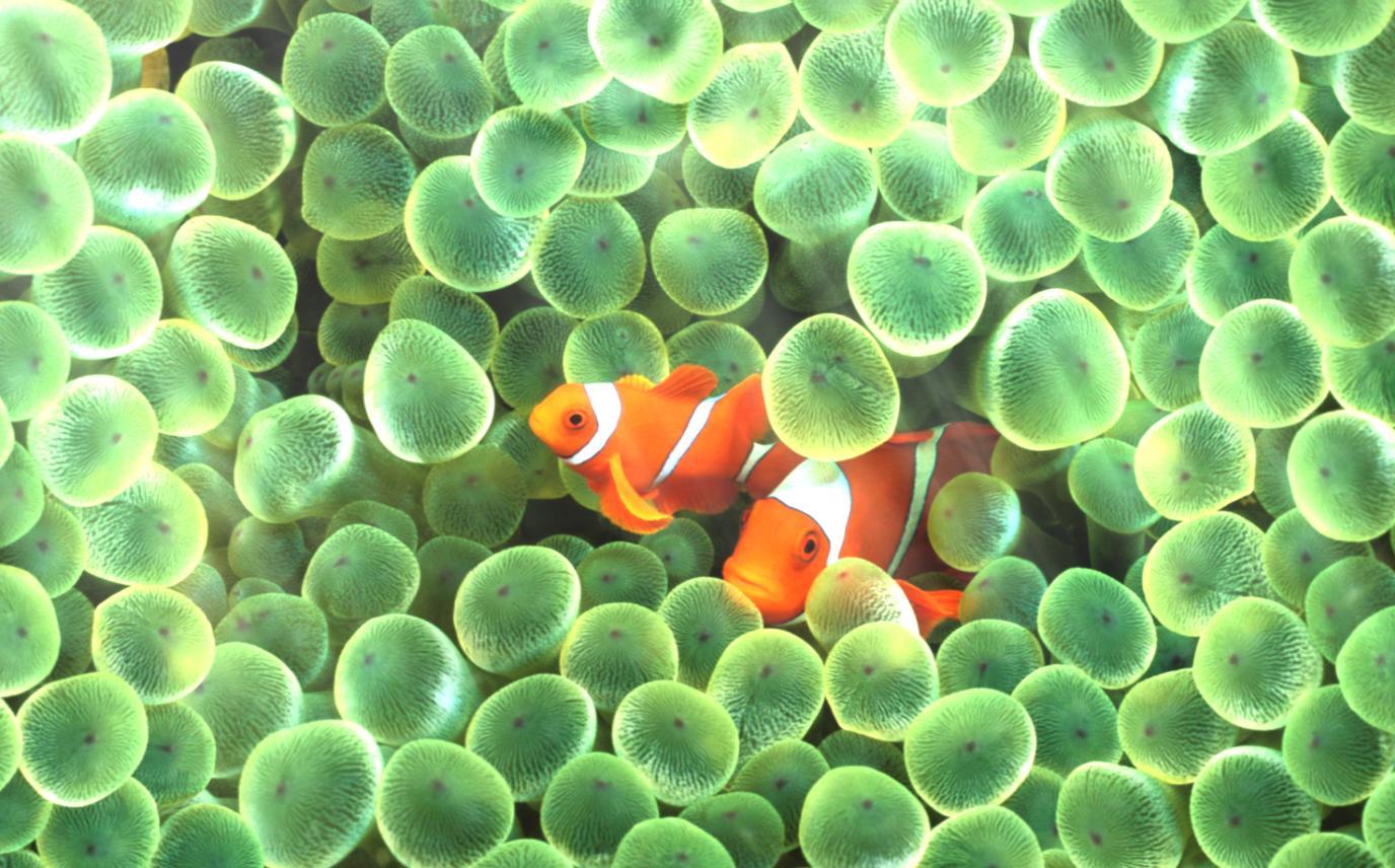 Ocean Adventure Aquarium Animated Wallpaper Desktopanimated