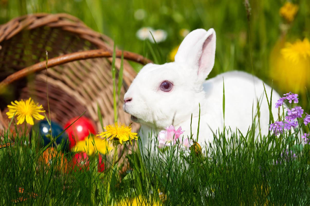 Easter Bunny Animated Wallpaper Desktopanimated Com